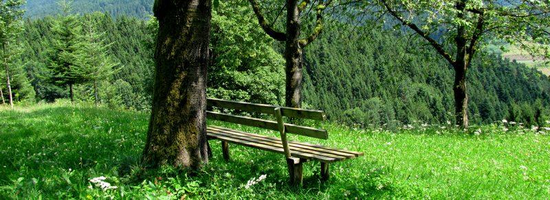 Wege durch den Schwarzwald